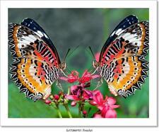 The Butterfly Art/Canvas Print. Poster, Wall Art, Home Decor