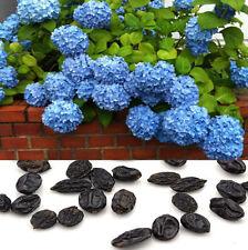 50pcs Blue Hydrangea Flower Seeds Plants Home Garden Decor Potted Rare Seeds