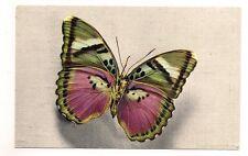 papillon  cethosia  (tonkin)