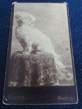 1860S RARE DANBURY CT DOG SITTING ON TABLE CDV PHOTOGRAPH by SANFORD