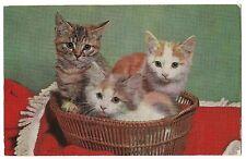 Three Little Kittens in a Basket Tri Colored Calico Orange Postcard Cat 3 Trio