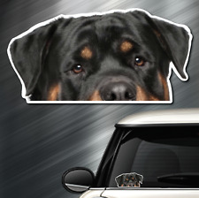 (1) Rottweiler DOG Peeper Sticker Window Peep Decal Car Auto AKC Puppy 3.5x6.75