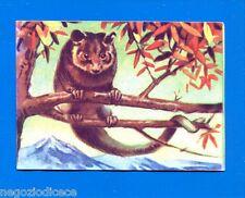 ANIMALI - Lampo 1964 - Figurina-Sticker n. 110 - GHIRO -New