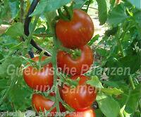 🔥 🍅 Kloster-Tomate Türkei ** gestreifte Tomaten * 10 Samen