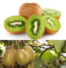 FD849 KIWI FRUIT Actinidia Vine Seeds Grow Delicious Healthy Fruit Seeds ~10PCs!