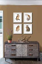 Owl Art Prints Set of 4 Unframed Natural History Bird Illustrations Wall Decor
