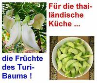 Exot selten Samen: Kolibri - Baum lustige Blüten wie kleine Papageienschnäbel.