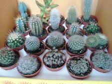 5 x Mixed Cacti/Cactus Plants (5.5cm Pots) - Cacti Assorted Varieties