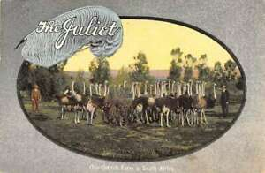 Washington DC The Juliet Ostrich Feathers Advertising Vintage Postcard AA43441