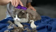 Kong - ZoomGroom - Cat Groomer-(Free Shipping In USA)