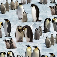 Fabric Snow Penguins on Cotton ELIZABETH STUDIOS  1/4 Yard 490E-SNOW