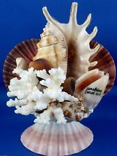 RARE Retro GENUINE CORAL & SHELL SUNSHINE COAST DISPLAY Collectable VG - In Aust