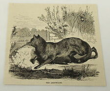 1884 magazine engraving~ THE AMBUSCADE - FOX HUNTING ambush