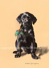 Black Labrador Puppy Christmas cards pack of 10. c342x