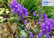 DR T&T prepared  fu zi  100g dry herbs