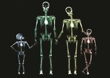 X RAY FAMILY SKELETON A3 ART PRINT POSTER GZ703