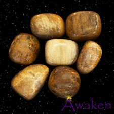 *ONE* PETRIFIED WOOD Natural Tumbled Stone Approx 15-20mm *TRUSTED SELLER*