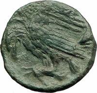 AKRAGAS Sicily 279BC Apollo Eagle Hare Genuine  Ancient Greek  Coin i76749