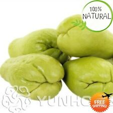 Delicious Chayote Bonsai Seeds Plants Vegetable Highnutrition Garden 20pcs