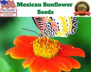 50 Mexican Torch Orange Sunflower Seeds from The Brooklyn Botanical Garden Club!