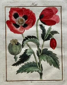 1790 POPPY Botany - Joh. Sollerer hand coloured engraving