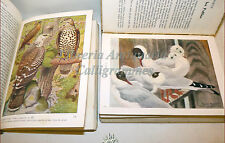 UCCELLI Oiseaux Rapaces + Palmipedes 2 volumi, RAPACI PALMIPEDI tavole a colori