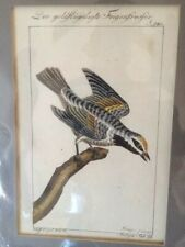 Three John Gould W. Hart 1787 Hand Colored Bird Lithographs.With Certificates
