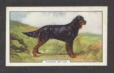 1938 UK Dog Art Full Body Portrait Study Gallaher Cigarette Card GORDON SETTER