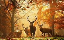 Deer in Forest Home Decor Canvas Print A4 Size (210 x 297mm)