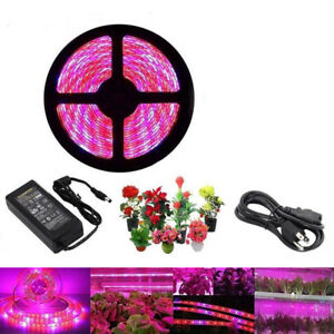 Full Spectrum led Grow Light Lamp  Hydro Hydroponic Greenhouse Plant Power 5m