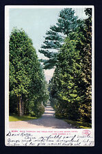 1905-07 Path in Trees Fort William Henry Hotel Lake George New York postcard