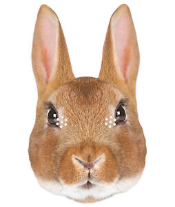 Rabbit Animal 2D Single Card Party Mask - World Book Day Wildlife Bunny