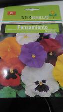 Pensamiento Gigante pansy semillas 240 aprox. Viola wittrockiana
