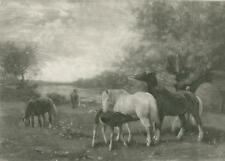ANTIQUE HORSE MARE COLT NURSING MILK MEADOW FLOWERS CLYDESDALE EQUESTRIAN PRINT