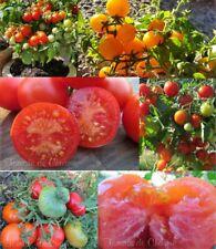 "Lot "" PRECOCE "" 4 variétés de tomate productive savoureuse résistante méth.bio"
