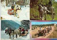 Lot 4 cartes postales CHEVAL CHEVAUX EQUITATION attelages