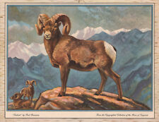 "PAUL BRANSOM - SENTINEL Bighorn Sheep -  Hunting Game Print 11x14"" Sporting Art"