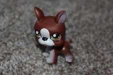 Littlest Pet Shop Boston Terrier #118 Brown White Dog Green Eyes Puppy LPS Toy
