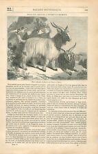Bouc & Chèvre à Duvet Cachemire au Jardin des Plantes à Paris GRAVURE PRINT 1834