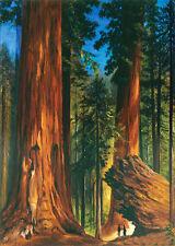 Stunning Oil painting Gilbert Munger - Redwood Forest great landscape & woods