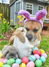 Buy A Dog a Dinner - Bully For You -  Dinner for Dogs - Easter Dinner
