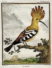 1779 Mansardi after Jacques de Seve - Hoopoe Huppe - Ornithology - 4to engraving