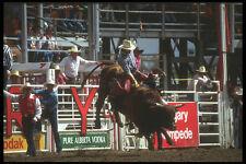 331087 Bull Riding A4 Photo Print