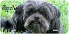 Affenpinscher Dog Personalized Aluminum Any Name Novelty Auto Car License Plate