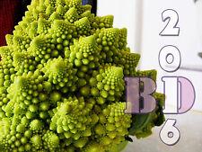 Cauliflower - ROMANESCO NATALINO - 1.5g appx 500 Seeds - Original Packing_73