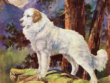 1930s Antique Great Pyrenees Dog Print Nina Scott Langley Dog Art 3544-W