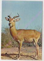 CPSM AFRIQUE AFRICA FAUNE AFRICAINE AFRICAN FAUNA Antilope Edt HOA QUI