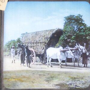 India Ceylon double bull cart magic lantern slide antique photographic