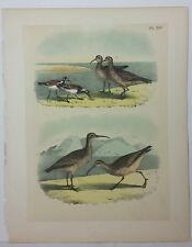 The Birds of North America. Studer. 1881. Curlew & Turnstone. XLV