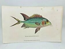 Original 1803 Shaw Hand Colored Copperplate Engraving Fish - Holocentrus